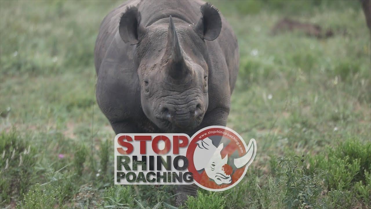 stoprhinopoaching, rhinopoaching, savetherhino, rhino, rhinos, rangers, krugernationalpark